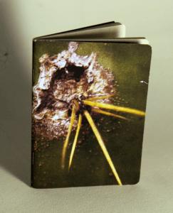 capa-caderno-cactus