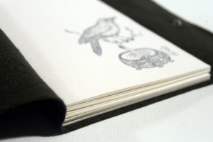 folha-de-rosto-sabia-caderno-folha-de-desenho